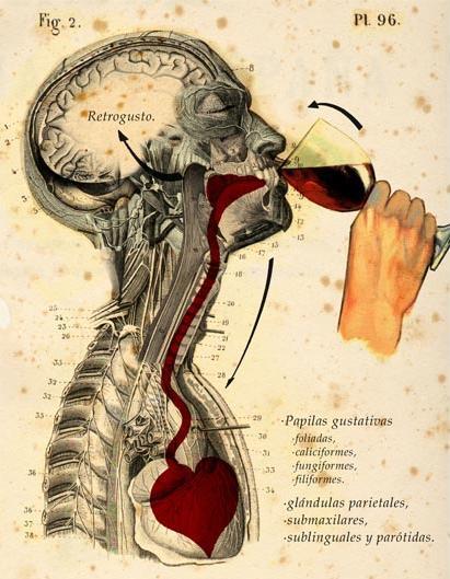 in_vino_veritas_degustativa