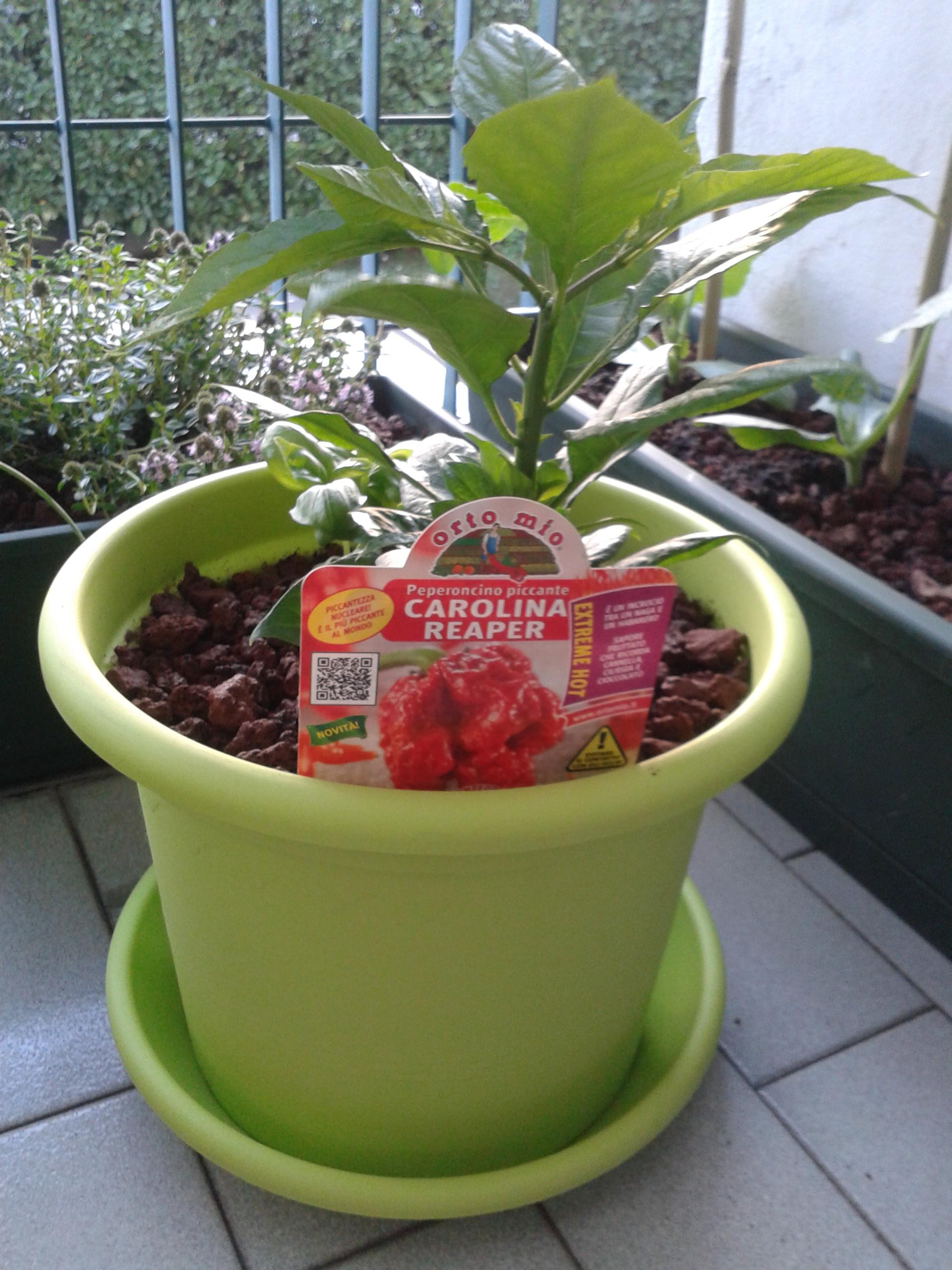 Il mio orto cuochi padelle - Santolina in cucina ...